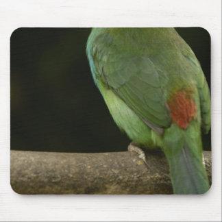 Crimson-rumped Toucanet bird Aulacorhynchus Mouse Mat