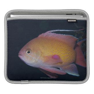 Crimson Seabream iPad Sleeve