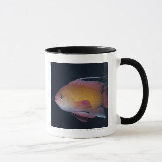Crimson Seabream Mug