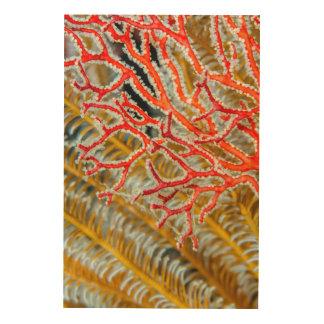 Crinoids and Sea Fan Wood Print