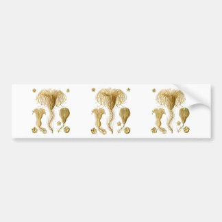 Crinoids Bumper Sticker