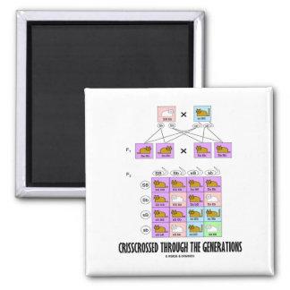 Crisscrossed Through The Generations (Cat Punnett) Square Magnet