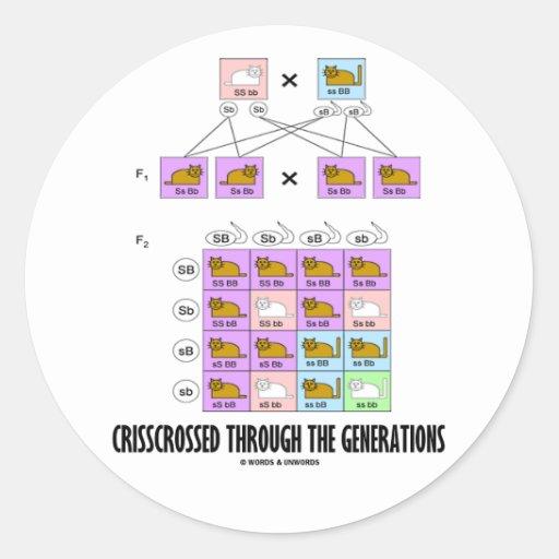 Crisscrossed Through The Generations (Cat Punnett) Sticker