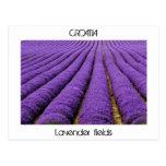CROATIA - lavender fields Post Cards