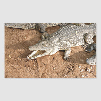 Crocodile expectation rectangular sticker