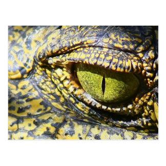 Crocodile Eye Postcard
