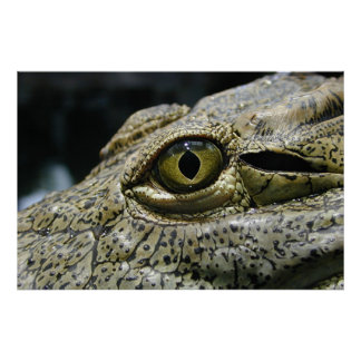 Crocodile eye poster