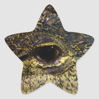 Crocodile Eye Star Sticker