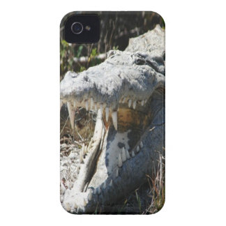 Crocodile iPhone 4 cover