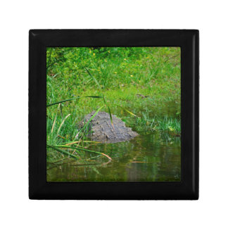 crocodile on bank back view reptile croc gator small square gift box