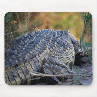 Crocodile on Land Mouse Mat