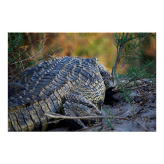 Crocodile on Land Poster