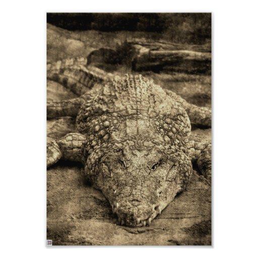Crocodile Photo Print