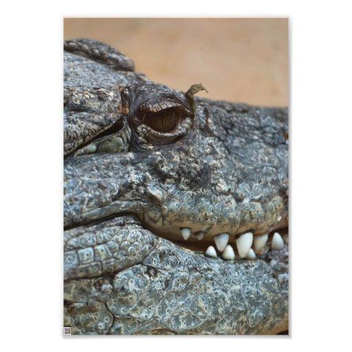 Crocodile Art Photo