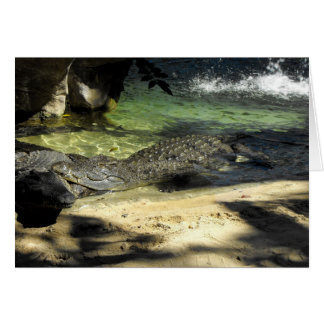 Crocodiles Card