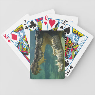 Crocodiles open mouth bicycle playing cards