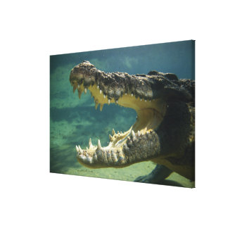 Crocodiles open mouth canvas print