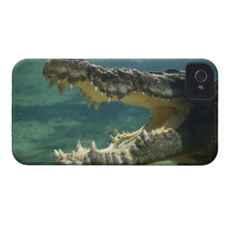Crocodiles open mouth iPhone 4 case