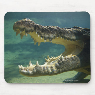 Crocodiles open mouth mouse pad