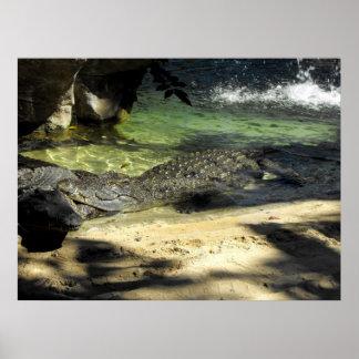 Crocodiles Print