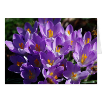 Crocus Card