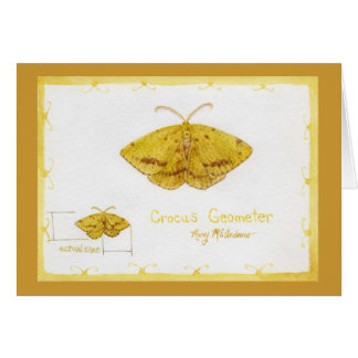 Crocus Geometer Moth watercolor Card
