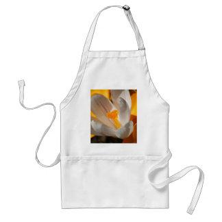crocus standard apron
