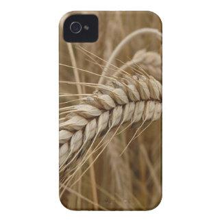 crop Case-Mate iPhone 4 case