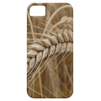 crop iPhone 5/5S cases