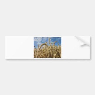 Crops of Cereals and Summer Sky Bumper Sticker