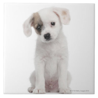 Cross breed puppy (2 months old) large square tile