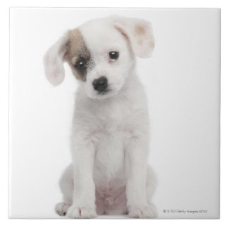 Cross breed puppy (2 months old) tile