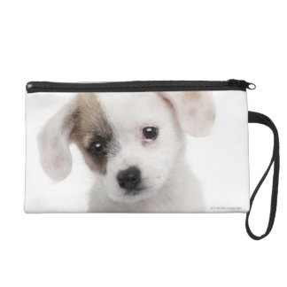 Cross breed puppy (2 months old) wristlets