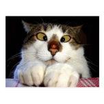 Cross Eyed Cat And Ladybird Postcard