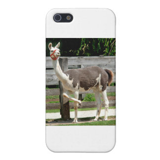 Cross-Legged Llama iPhone Case iPhone 5/5S Cover