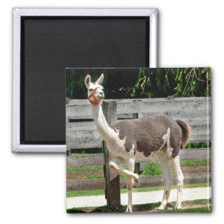 Cross-Legged Llama Magnet