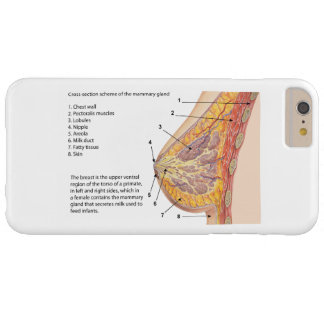 Cross Section Diagram of the Human Mammary Gland Barely There iPhone 6 Plus Case