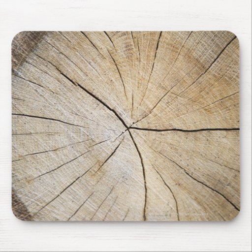 Cross section of tree trunk mouse pads