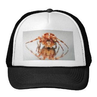 Cross spider on a mirror cap