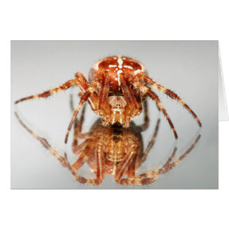 Cross spider on a mirror greeting card