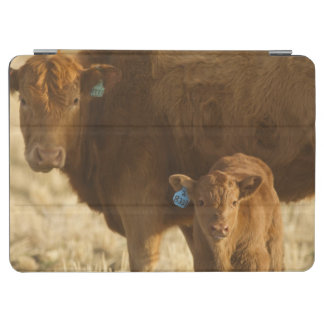 Crossbred cow with calf near Choteau, Montana, iPad Air Cover