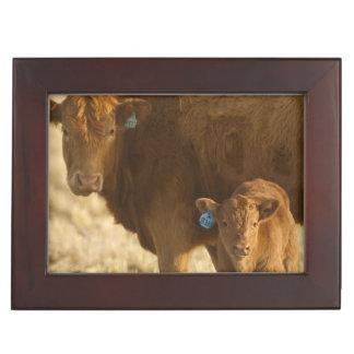 Crossbred cow with calf near Choteau, Montana, Keepsake Box