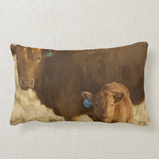 Crossbred cow with calf near Choteau, Montana, Lumbar Cushion