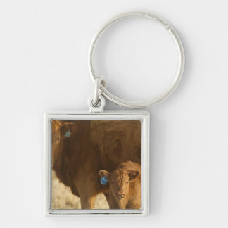 Crossbred cow with calf near Choteau, Montana, Silver-Colored Square Key Ring