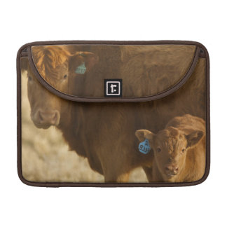 Crossbred cow with calf near Choteau, Montana, Sleeves For MacBook Pro