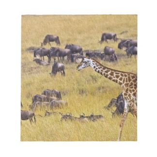 Crossing of the Mara River by Giraffes and Notepads