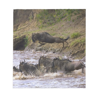 Crossing of the Mara River by Zebras and Notepad
