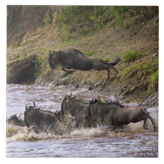 Crossing of the Mara River by Zebras and Tile
