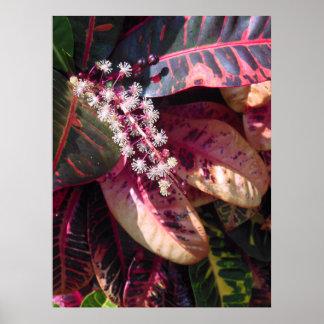 Croton Blossom Poster