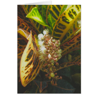 Croton in Bloom Note Card